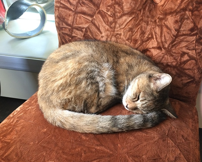 A cat of Issui pottery sleeps